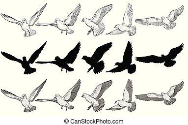 volare, piccioni, vettore, set, illustrazione