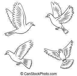 volare, set, colomba, collezione