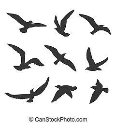 volare, silhouette, vettore, set, uccelli