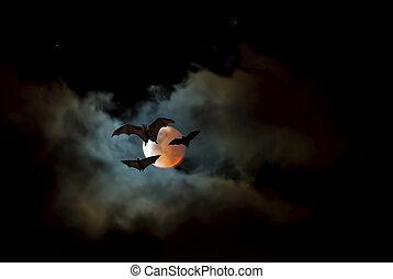 volare, volpe, o, pipistrello frutta, sopra, cielo scuro