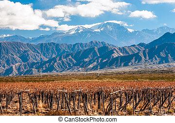Volcano Aconcagua and Vineyard. Aconcagua is the highest...