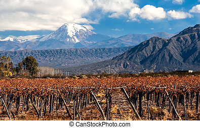 Volcano Aconcagua and Vineyard. Aconcagua is the highest...