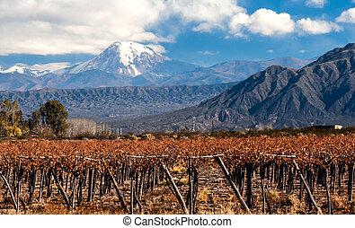 Volcano Aconcagua and Vineyard. Aconcagua is the highest ...