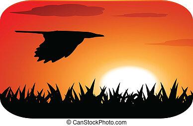 voler, coucher soleil, oiseau