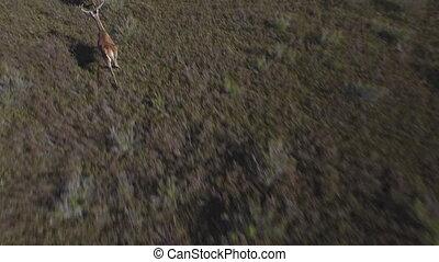 voler, deers, courant, fin, mâle, douceur