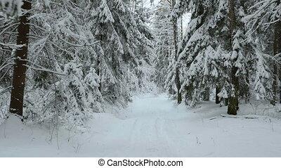 voler, forêt, hiver
