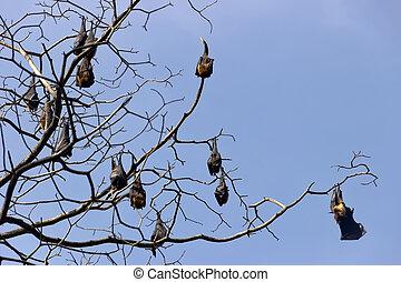 voler, renard, beaucoup, indien, forêt, hiver