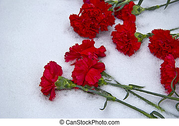 Volgograd, day of the 70th anniversary of Stalingrad victory. Red carnation flowers on snow