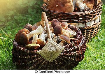 voll, steinpilze, pilze, wald, korb, frisch