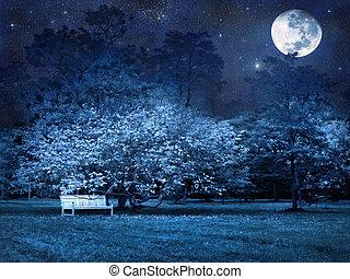 volle, park, maan, nacht