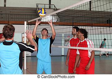 volley-ball, játékosok