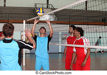 volley-ball players