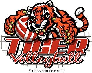 volley-ball, tigre