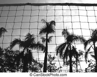 Volleyball Net and Palm Trees