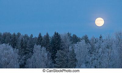vollmond, aus, frost, bedeckt, wald
