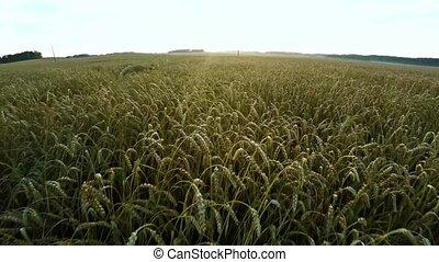 volo, agriculture., sopra, volare, campo, frumento