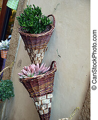 Volterra - beautiful flower on the wall