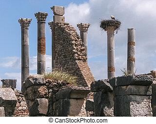 volubilis, stork's, nest, ruinen, römisches