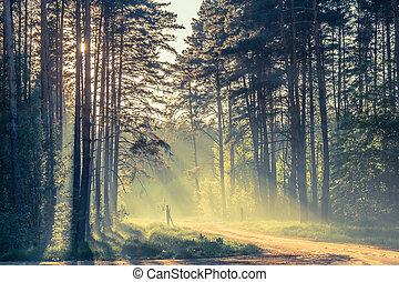 volume, soleil, soir, forêt, lumière