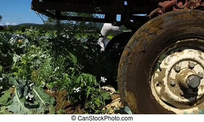 Volunteer work on ecological farm crops.