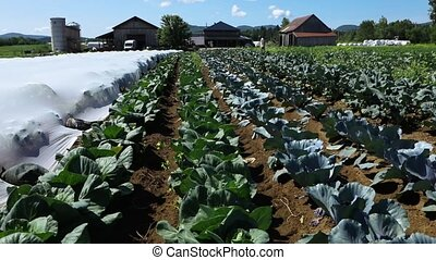 Rows of healthy vegetables are seen planted on a large eco-friendly farm as the camera slowly pans upwards to reveal workers and buildings in the background.