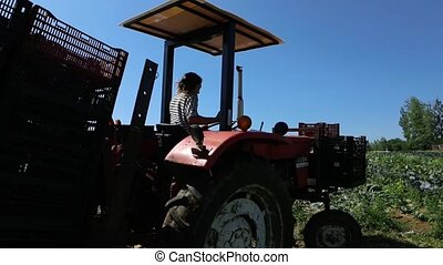 Slow motion footage of a farmer driving a large tractor in an open field filled with broccoli plants, reversing and turning steering wheel during harvest season.