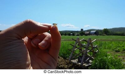 Slow motion footage of a small wasp on the fingertip of a worker, crop pollination and ecosystems on a large organic farm holding with open fields in background