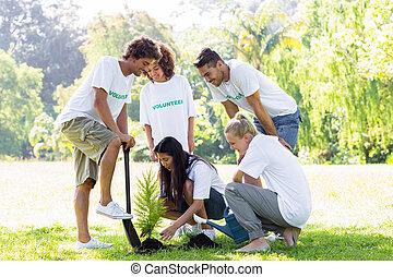 Volunteers planting in park