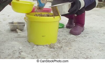 Volunteers putting food to dogs in a dog shelter - Close up....