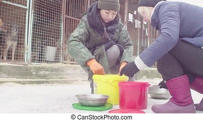 Volunteers putting food to dogs in a dog shelter - Two...