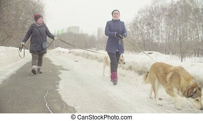 Volunteers walking with stray dogs from dogs shelter -...