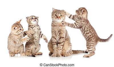 volwassene, kat, en, jonge, katjes, groep, vrijstaand, op wit