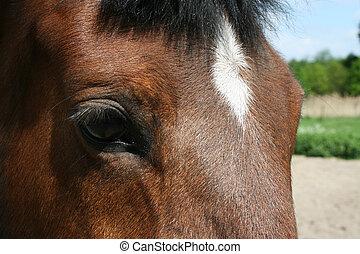 vom, pferd, auge