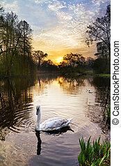 Vondelpark swan