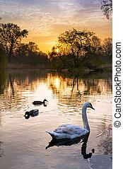 vondelpark, zonopkomst, vogels