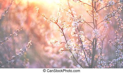 voorjaarsbloesem, achtergrond., mooi, natuur scène, met, bloeien, boompje, en, zon flakkerend licht