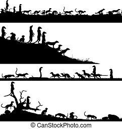 vordergründe, erdmännchen