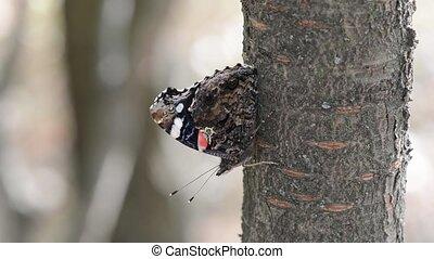 vorst butterfly, in, de, oude boom