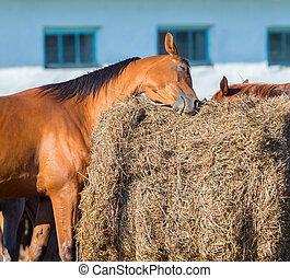 voskleurig paard, krassen, op, hooi