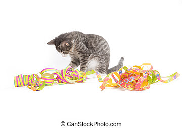 voucher as gift - little grey tiger kitten playing with...
