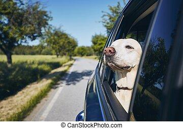 voyage, voiture., chien