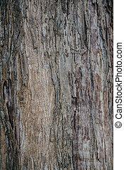 vrai, arbre, vieux, texture, exotique