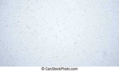 vrai, mouvement, lent, neige
