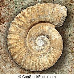 vrai, pétrifié, pierre, ancien, escargot, spirale, coquille, fossile