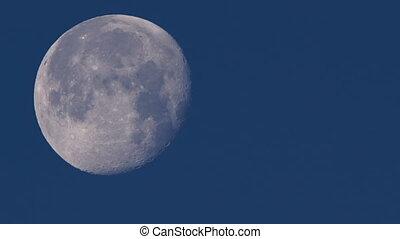 vrai, pleine lune, temps, phase, mouvements