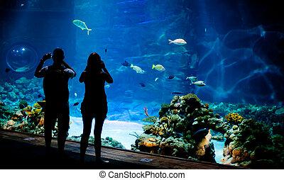 vrai, sous-marin, poissons, banc, fond