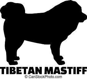 vrai, tibétain, silhouette, mot, mastiff