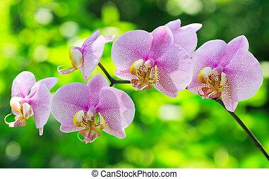 vrchol orchidej