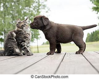 vrienden, dog, kat