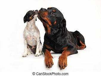 vrienden, honden